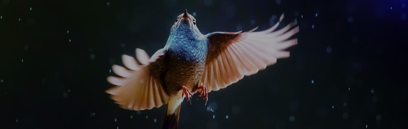 bird-top