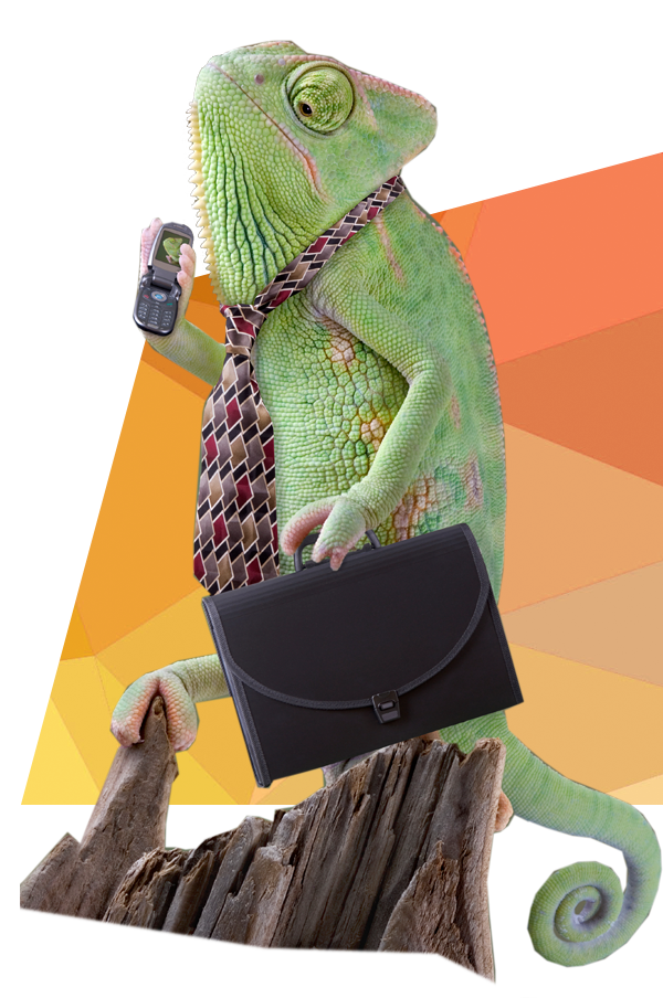 kameleon-adapt-2